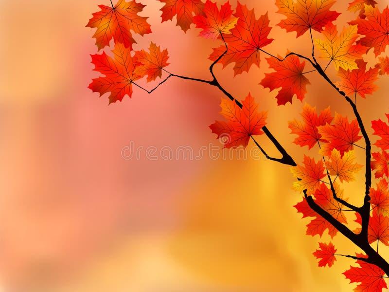 jesień ostrości liść spłycają bardzo ilustracji