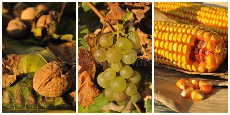 Jesień owoc i warzywo fotografia royalty free