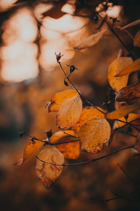 jesień póżno liść zdjęcie royalty free