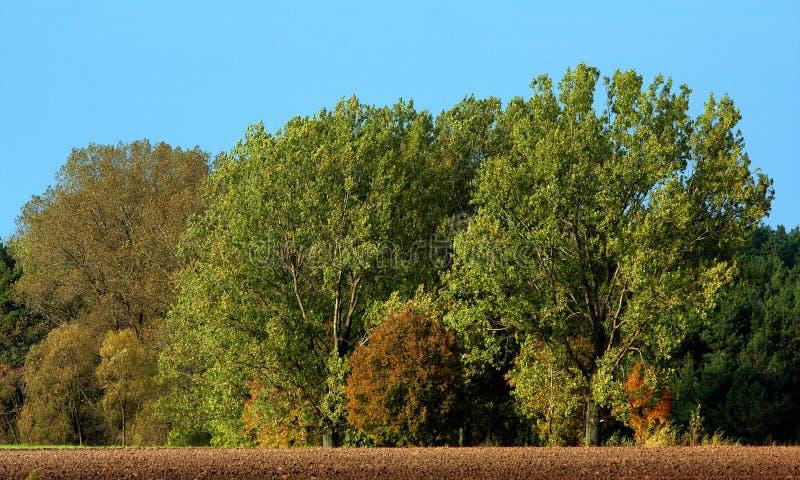 Jesień panoramiczny krajobraz drewna i łąki w Liwiec rzecznej dolinie w Polska zdjęcia royalty free