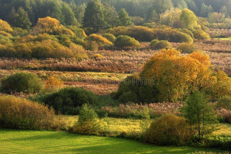 Jesień panoramiczny krajobraz drewna i łąki w Liwiec rzecznej dolinie w Polska obrazy stock