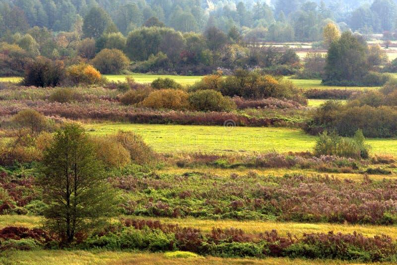 Jesień panoramiczny krajobraz drewna i łąki w Liwiec rzecznej dolinie w Polska obraz royalty free