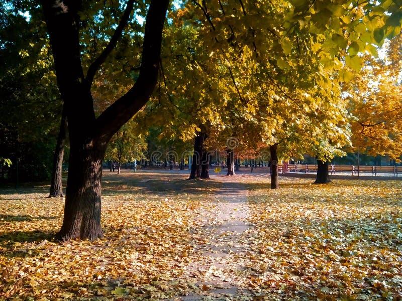 Jesień, park zdjęcie royalty free