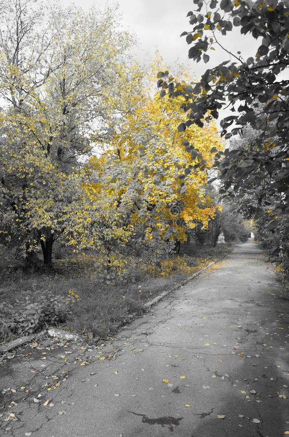 Jesień park zdjęcia stock
