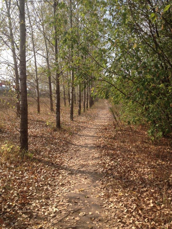 Jesień park blisko rzeki zdjęcie stock