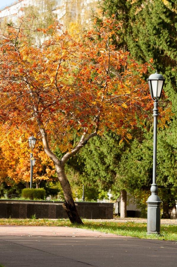 Jesień park Koniec fotografia royalty free