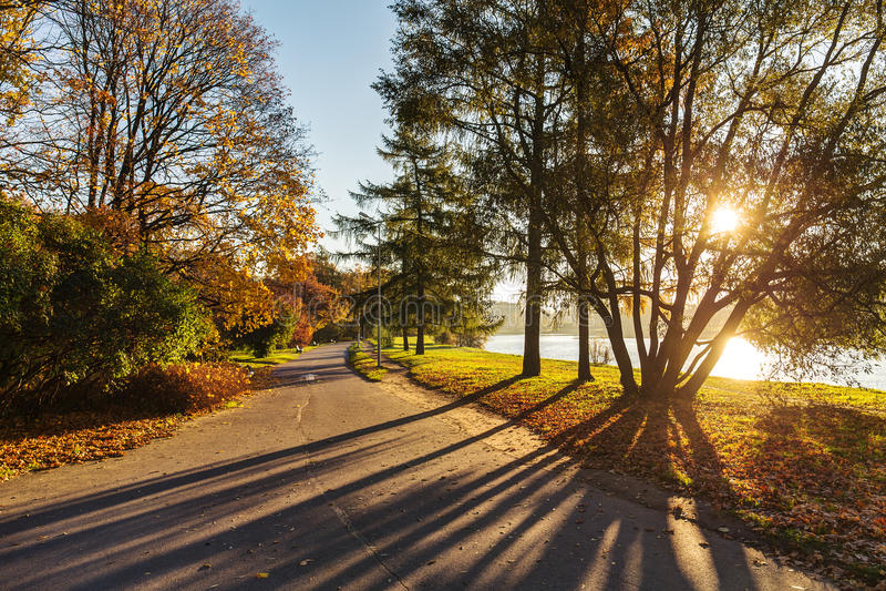 Jesień park na pogodnym ranku zdjęcie royalty free