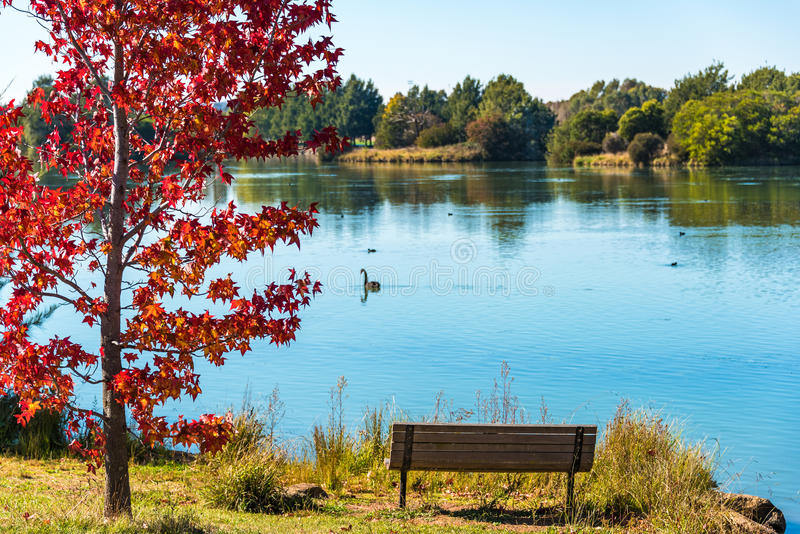 Jesień park z stawem i czerwonym klonem obrazy stock
