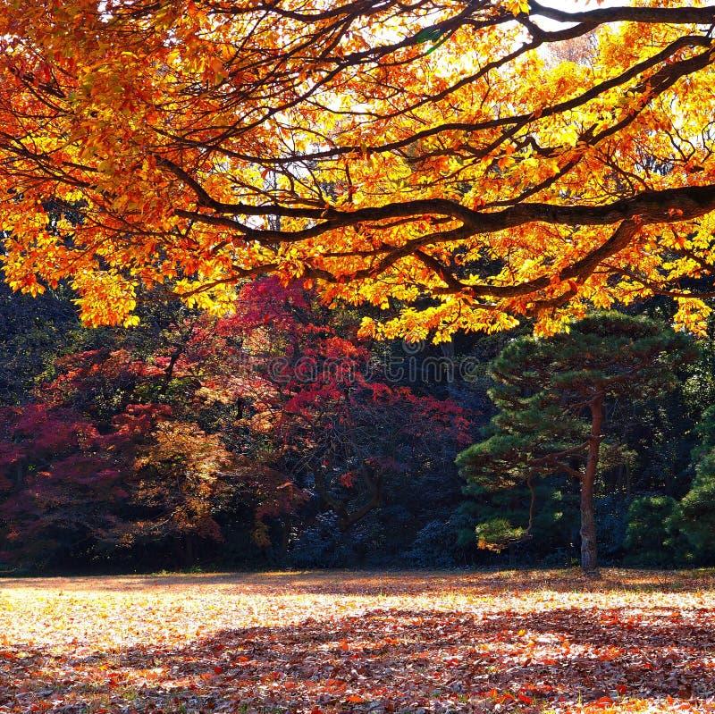 Jesień parka kolory zdjęcia royalty free