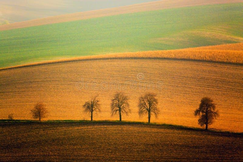 Jesień Południowy Morawski krajobraz z pięć drzewami i tocznymi falowań wzgórzami Faliści pola w republika czech Czech Tuscany fotografia stock