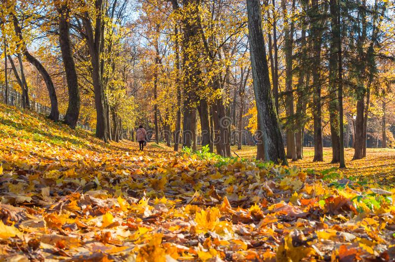 Jesień pogodny krajobraz z mężczyzna w parku zdjęcie stock