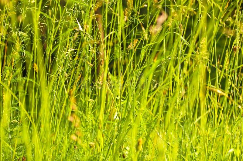 jesień pola trawy słońce zdjęcia stock