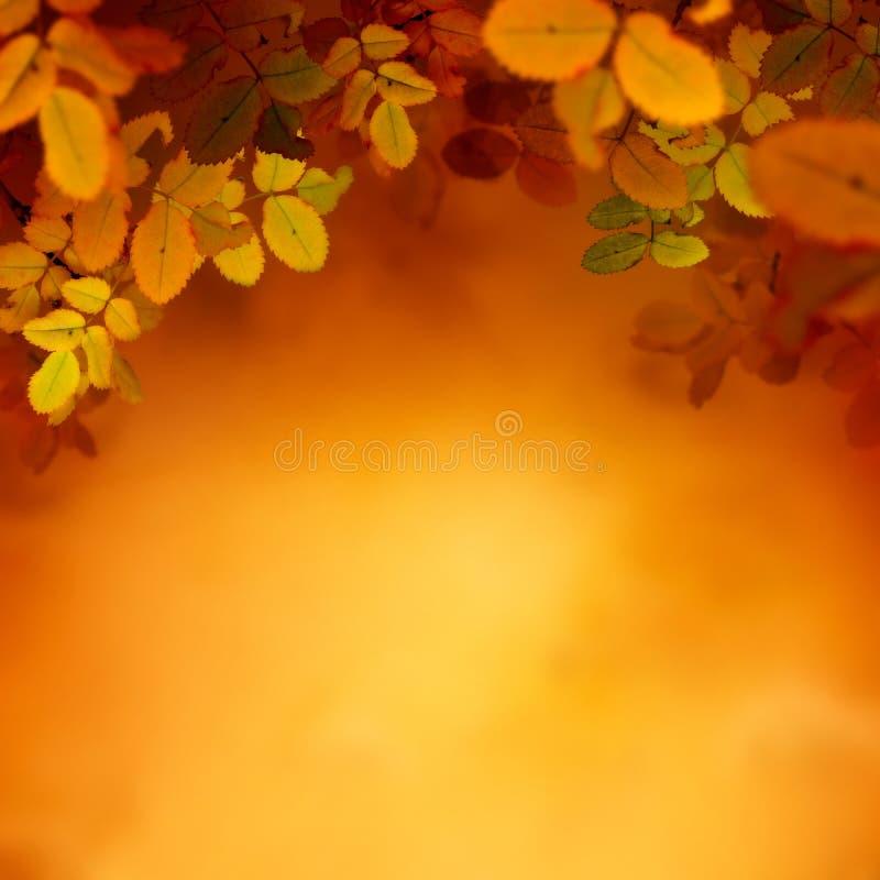 Jesień projekta tło zdjęcie royalty free