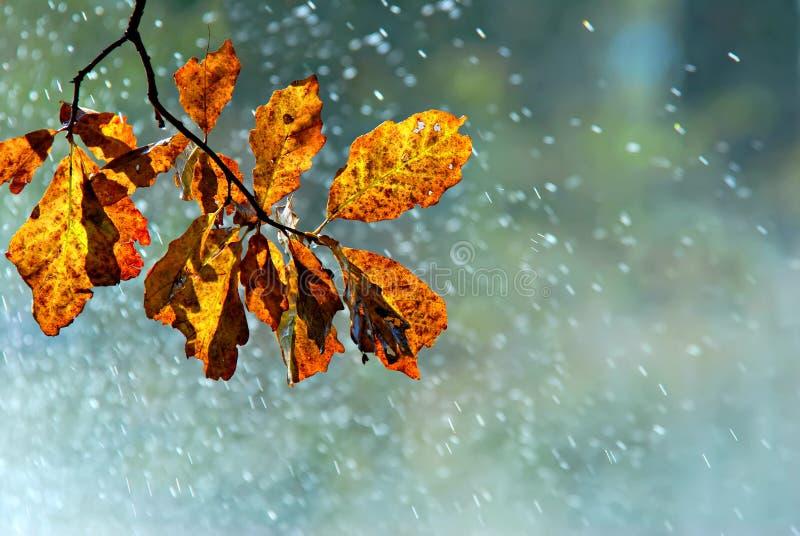 jesień prysznic zdjęcia royalty free