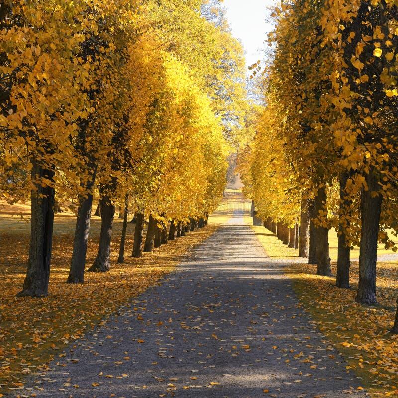 Jesień przy podwórkem i ogródem Natury tło z kolorowymi drzewami przy słonecznym dniem zdjęcia stock