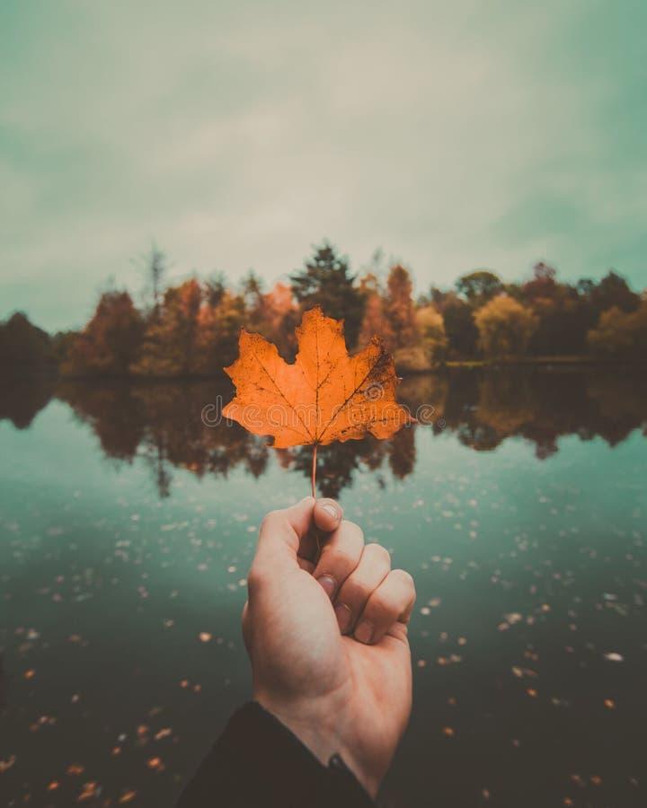 Jesień przy swój best zdjęcie stock