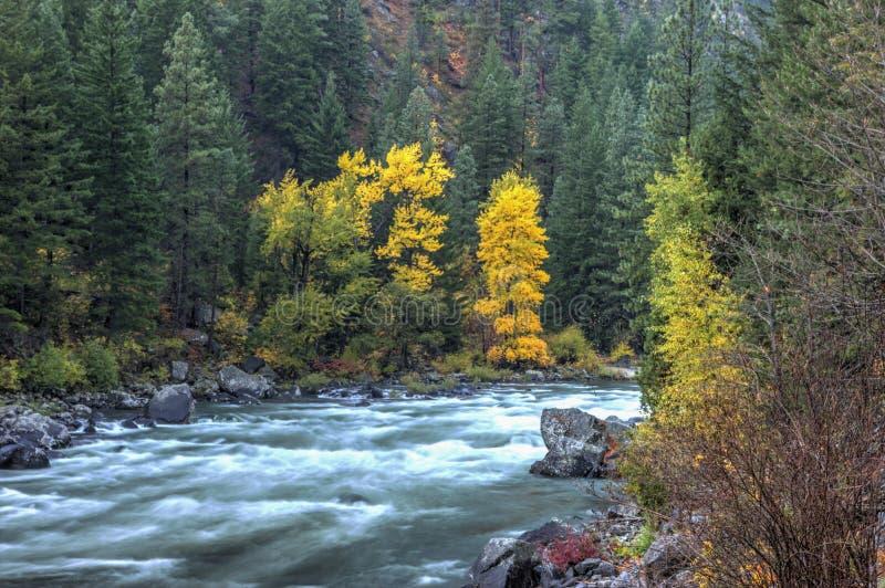 Jesień przy Wenatchee rzeką fotografia stock