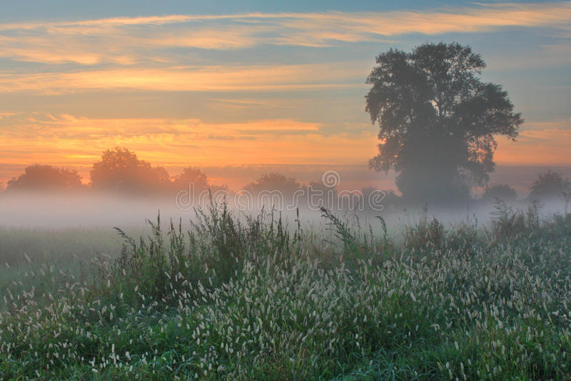 jesień ranek jutrzenkowy mglisty zdjęcie royalty free