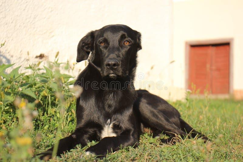 Jesień ranek pies zdjęcia stock