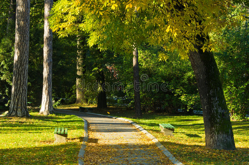 Jesień ranku scena w Topcider parku, wiatr dmucha i liście spadają zdjęcie royalty free