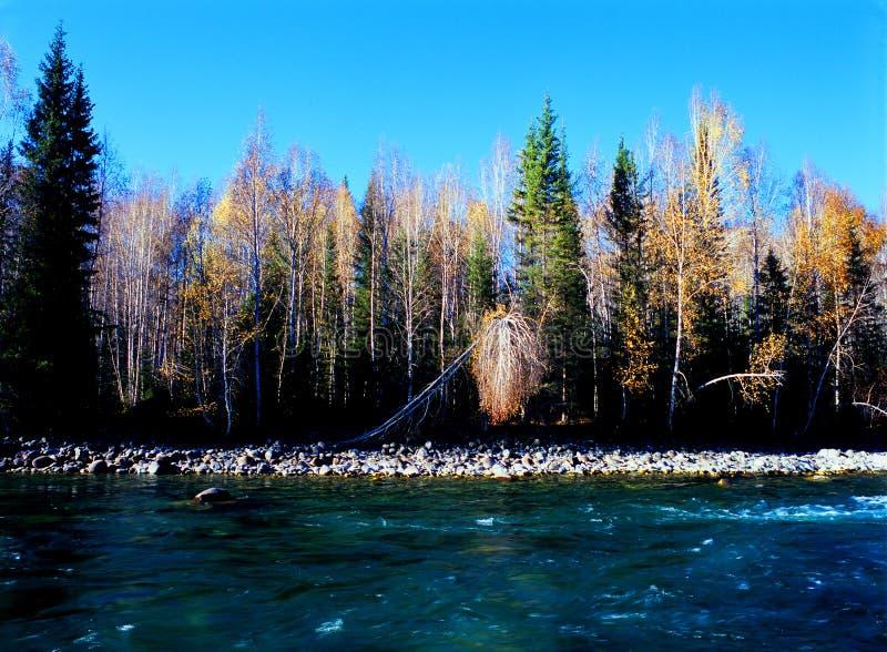 jesień rzeki drzewo obraz stock