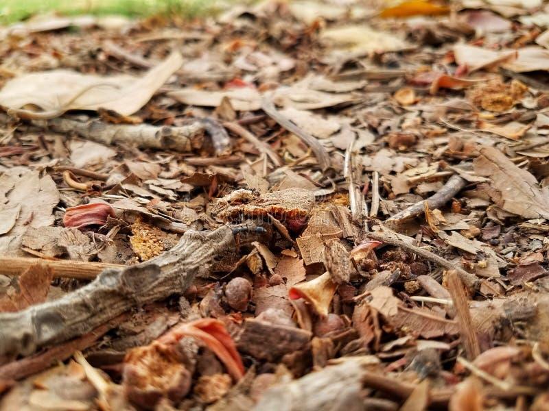 Jesień sezon jest zawsze nieprawdopodobny zdjęcie stock