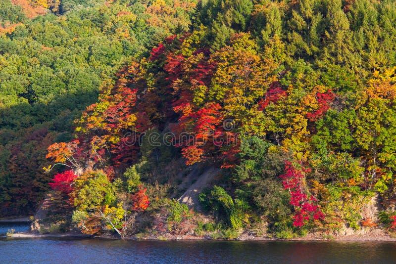 Jesień sezon przy Japonia jesienią fotografia royalty free