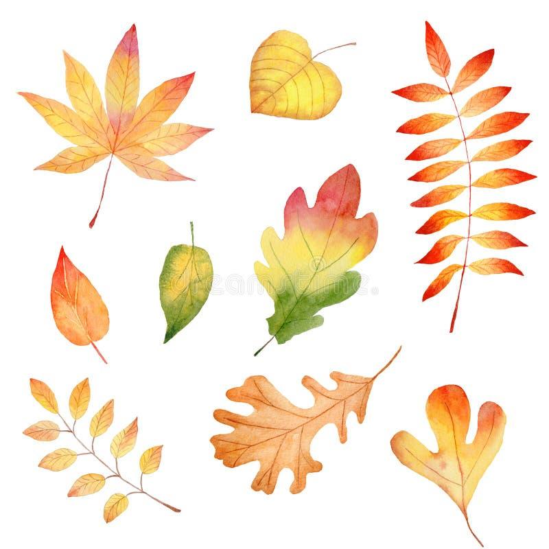 Jesień sezonu leafage akwareli raster lasowe ilustracje ustawiać fotografia royalty free