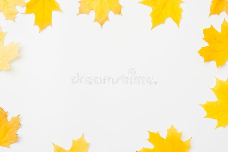 Jesień sezonu tła koloru żółtego liści rama fotografia royalty free