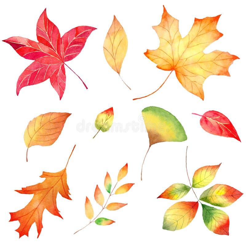 Jesień sezonu ulistnienia akwareli raster lasowe ilustracje ustawiać zdjęcie royalty free
