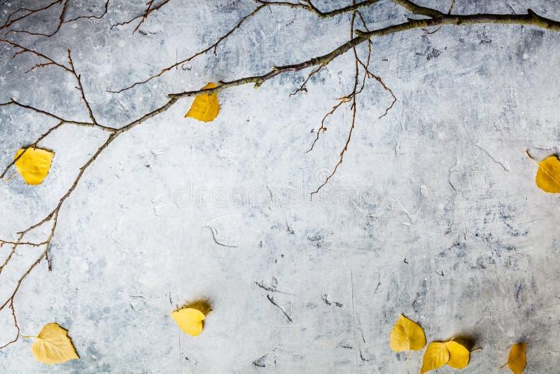 Jesień skład robić wysuszeni liście i gałąź fotografia stock