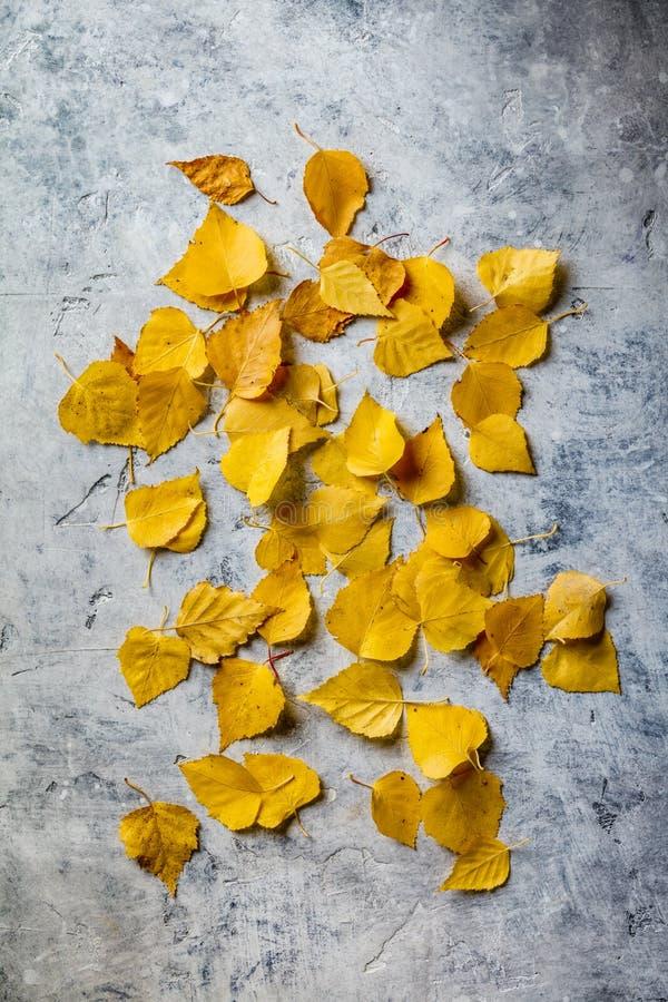 Jesień skład robić wysuszeni liście na betonowym tle zdjęcie stock