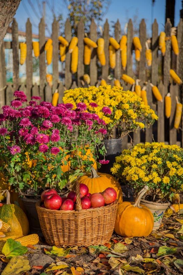Jesień skład z chryzantemą kwitnie, banie, jabłka w łozinowym koszu, ceramiczni garnki zdjęcia royalty free