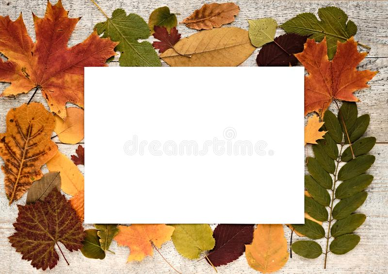 Jesień skład z liśćmi na drewnianym tła i białej księgi prześcieradle z tekst przestrzenią fotografia stock