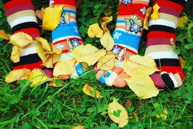 jesień skarpety obrazy stock