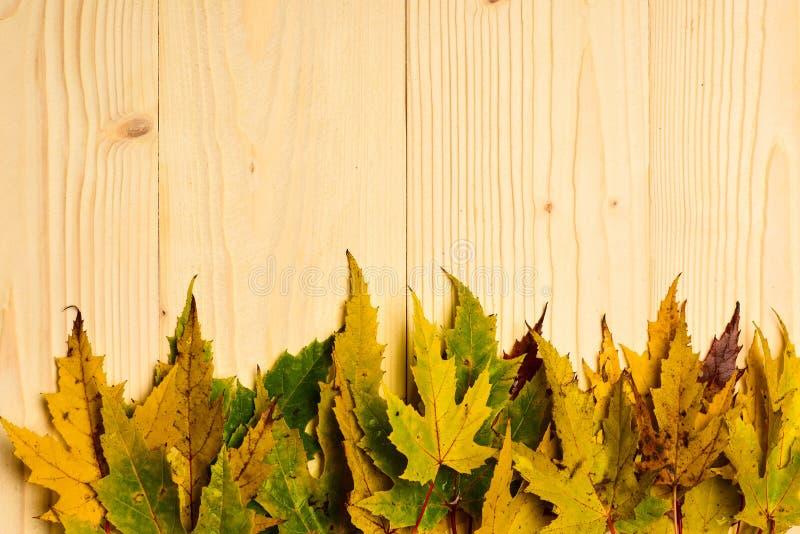 Jesień spadać liście zbierali w rzędzie na lekkim tle Sezonu jesiennego pojęcie Jesień kolorowi liście na drewnianej teksturze obrazy stock