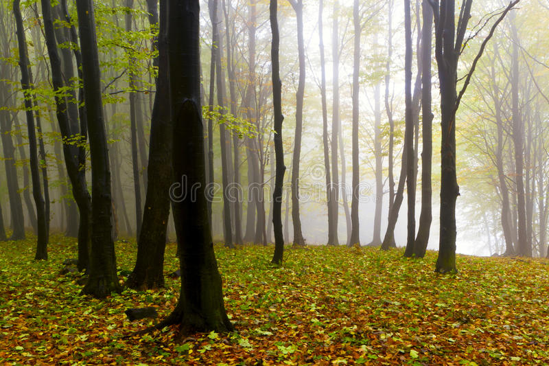 jesień spadać mgły las opuszczać tajemniczy fotografia royalty free