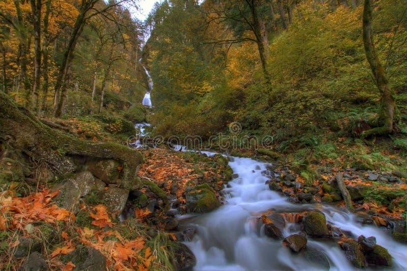 jesień spadać wahkeena zdjęcia royalty free