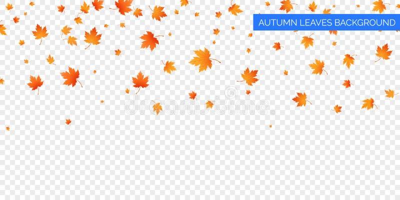 Jesień spada liście na przejrzystym tle Wektorowy jesienny ulistnienie spadek liście klonowi Jesieni tła projekt zdjęcia stock
