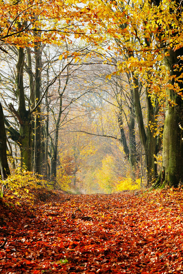 Jesień, spadek lasowa czerwień ścieżka opuszcza w kierunku światła fotografia royalty free