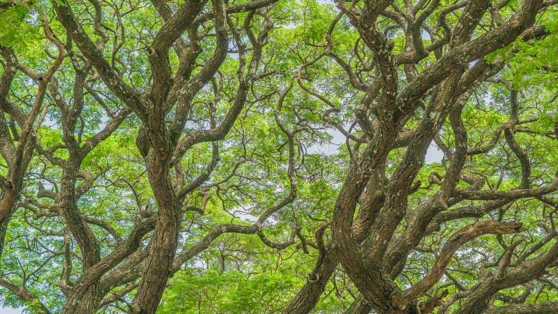 jesień spadek lasowej ścieżki sezon obrazy stock