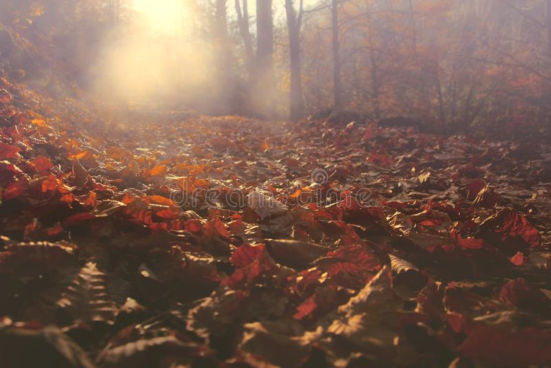 Jesień spadek opuszcza przy górą Olympus i światło słoneczne obraz royalty free