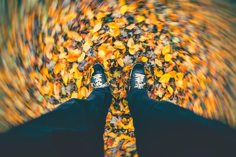 jesień spadek przyjaciele leaf pod spaceru pogody drewnem Silnego wiatru dmuchania susi liście wokoło mężczyzna pozyci na spadku zdjęcie royalty free