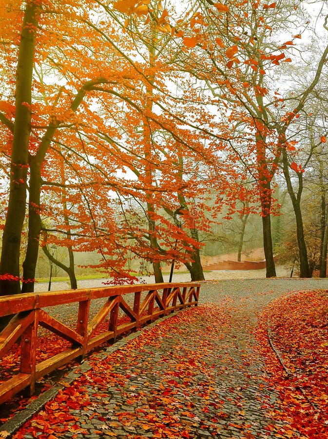 Jesień Spadek scena jesienny piękny park obraz royalty free