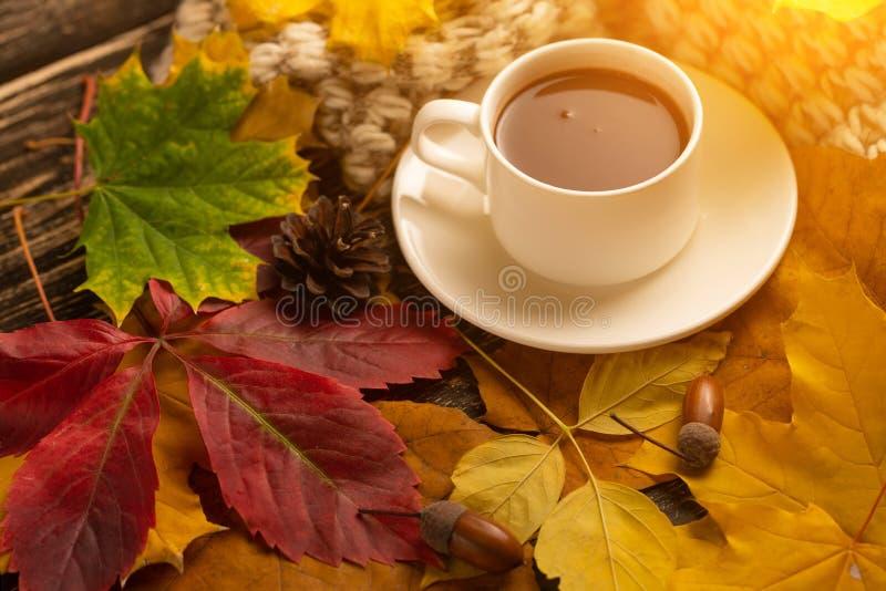 Jesień, spadków liście, gorący filiżanka kawy i ciepły szalik na tle drewniany stół, Sezonowy, ranek kawa, Niedziela ponowna fotografia royalty free