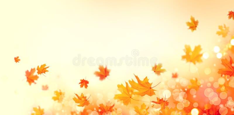 Jesień Spadku abstrakcjonistyczny tło z kolorowymi liśćmi i słońcem migocze zdjęcia stock