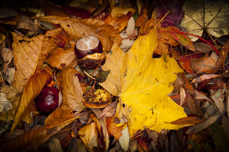 Jesień spadku kasztany i liście zdjęcie stock