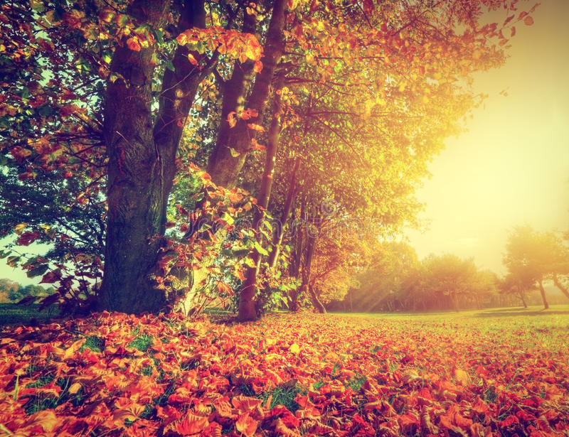 Jesień, spadku krajobraz w parku zdjęcia stock