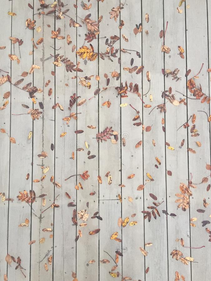 Jesień spadku liść fotografia stock