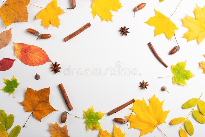 jesień spadku mieszkanie nieatutowy, odgórnego widoku kreatywnie deseniowy przygotowania obrazy royalty free